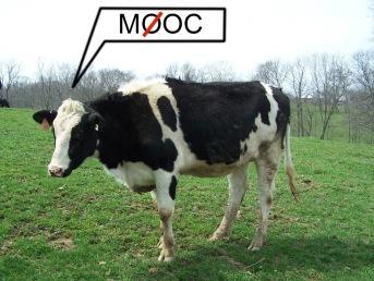 Non-open MOOC-cow.jpg